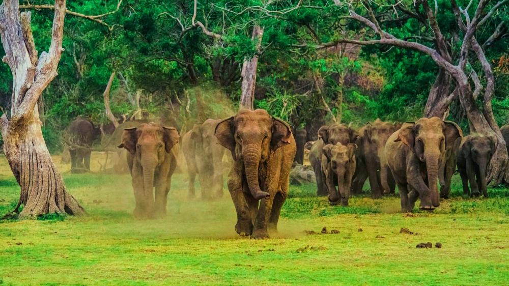Tribute_Lanka_Tours_14
