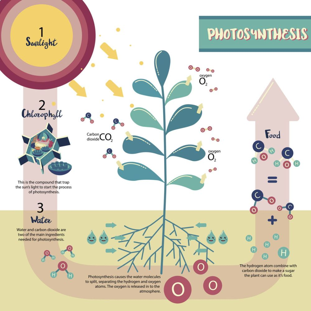 1280-658381440-photosynthesis-plant-cell-diagram